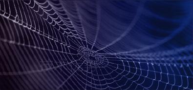 内容蜘蛛网